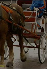 Horse-drawn Carriages/Artificial Eyes/Dog Food and Cat Food/Mirrors