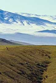 From Deserts to Grasslands