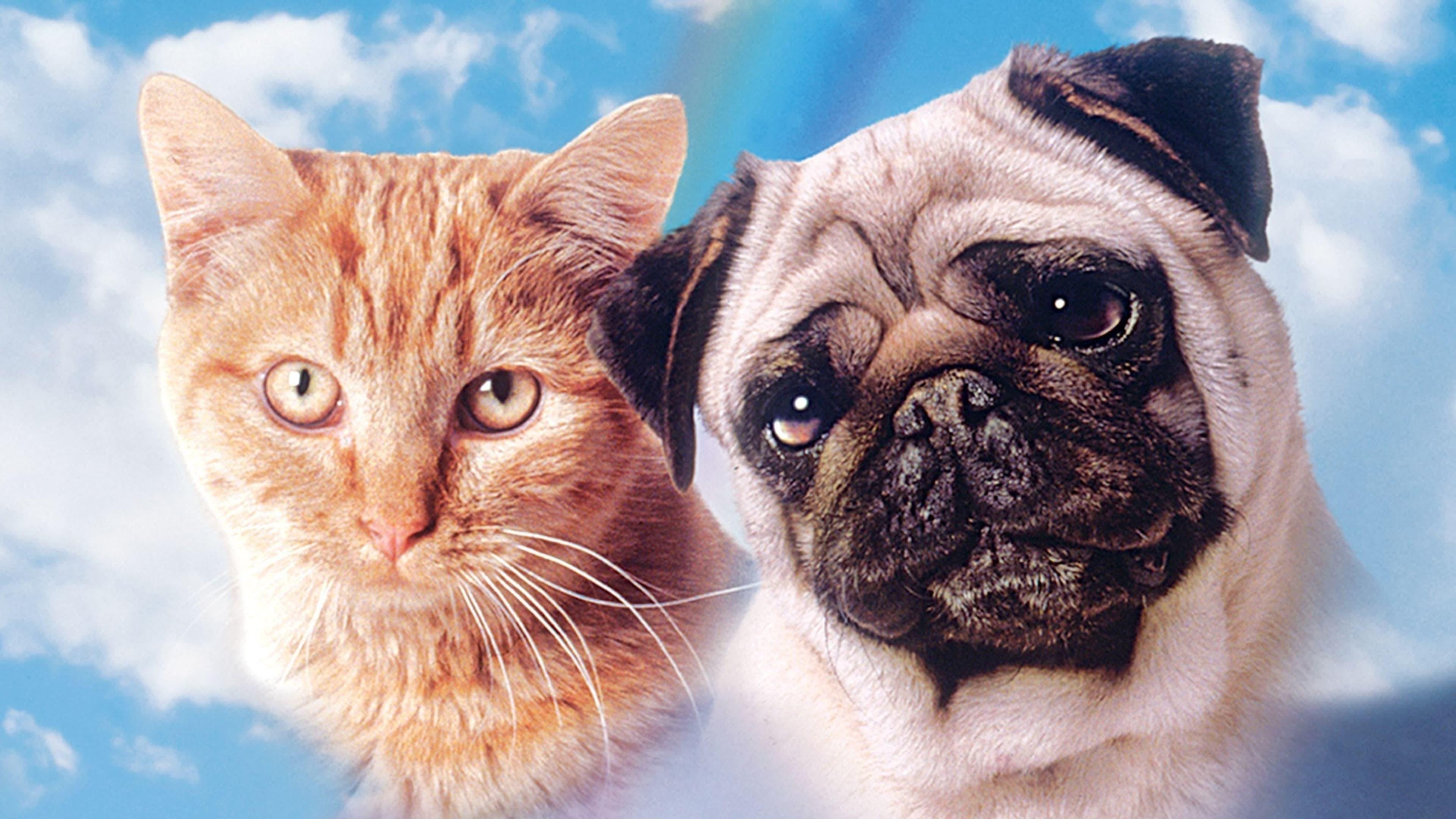 мопсы и кошки картинки сделать фото