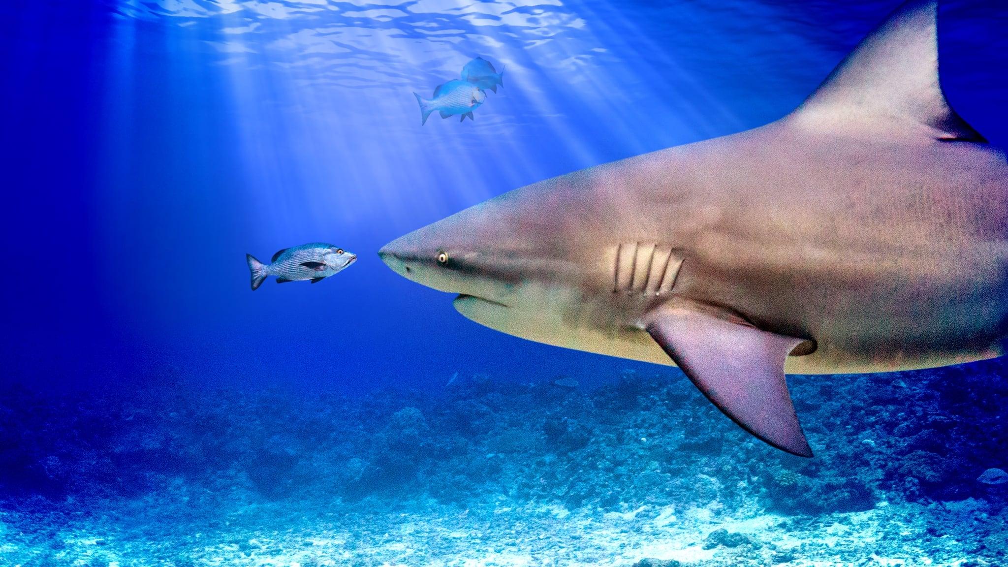 World's Biggest Bull Shark?