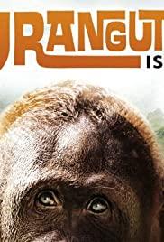 Orangutan Island