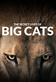 The Secret Lives of Big Cats 1X5