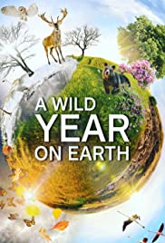 A Wild Year On Earth